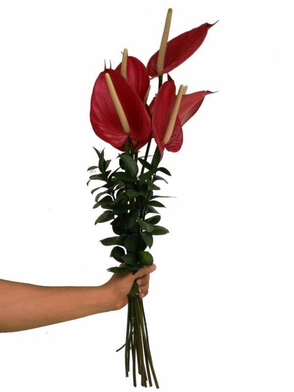 docena de rosas precio colombia